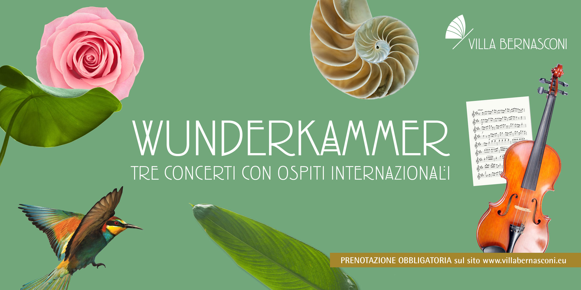 WunderKammer <br>Violino virtuoso